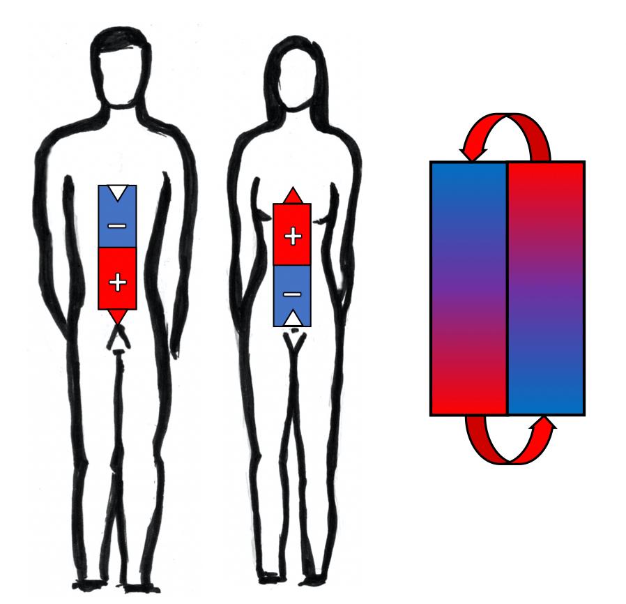 Geschlechtlicher Magnetismus