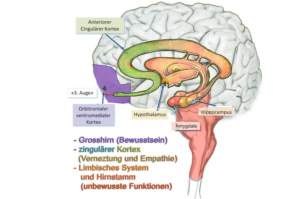 Das Reptiliengehirn - die Schlange im Kopf