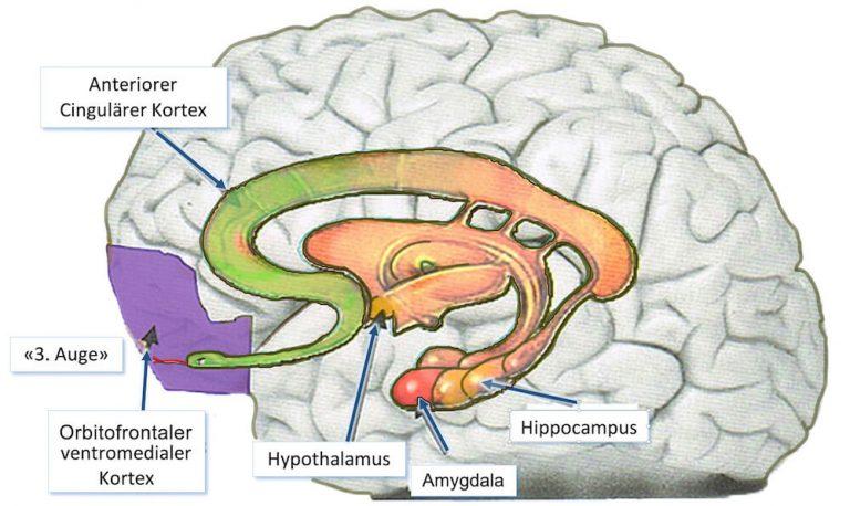 Die Schlange im Kopf