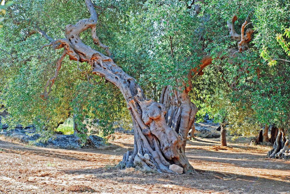 Die beiden Bäume im Paradies