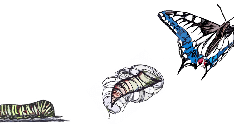 Schmetterlings Metamorphose