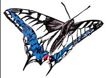 Salbung - Schmetterling